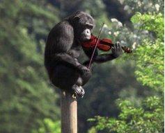 fiddler2007